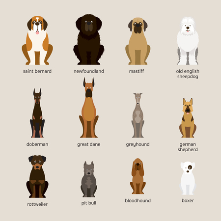 Dog Breeds Set, Giant and Large Size, Front View, Vector Illustration Vettoriali