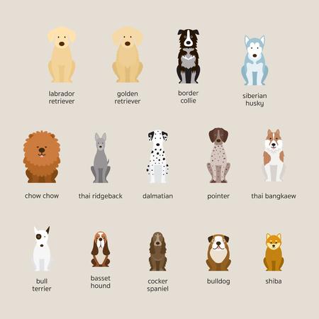 Conjunto de razas de perros, tamaño grande y mediano, vista frontal, ilustración vectorial