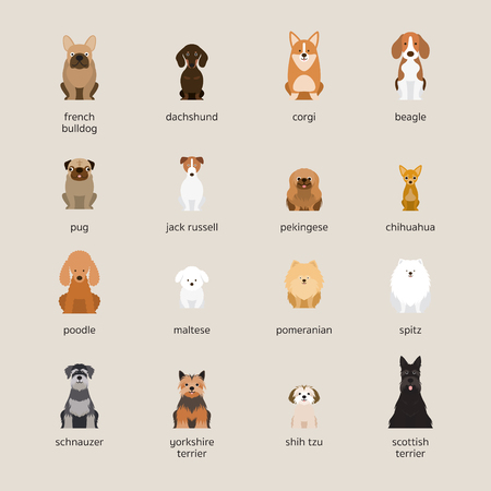 Dog Breeds Set, Small and Medium Size, Front View, Vector Illustration Çizim