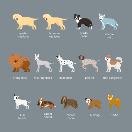 Dog Breeds Set, Large And Medium Size, Side View, Facing