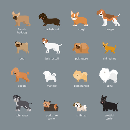 Dog Breeds Set, Small and Medium Size, Side View, Facing Front, Vector Illustration