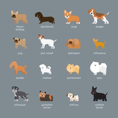 Conjunto de razas de perros, tamaño pequeño y mediano, vista lateral, frente a frente, ilustración vectorial Ilustración de vector