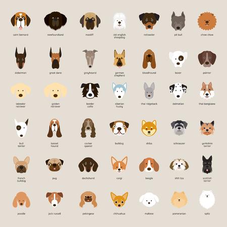 Razas de perros, cabeza, vista frontal, ilustración vectorial Ilustración de vector