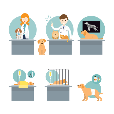 Veterinarian Checkup and Take Care Sick Pets