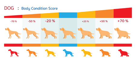 Dog Body Condition Score Health Chart Infographic