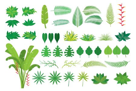 Leaves Tropical Jungle Set, Forrest, Rainforest, Plant and Nature Stock Vector - 105293332
