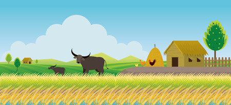 Thailand Rice or Paddy Field Background, Countryside Scene with Buffalo and Hut
