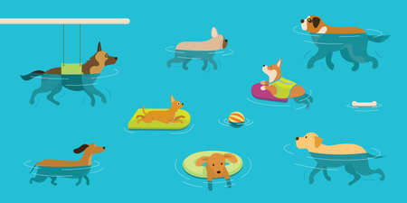 Dogs Swimming in Water or Pool, Playing, Exercise, Hydrotherapy or Physical Therapy Vetores
