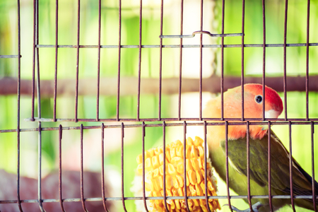 A Cute bird in cage. Banque d'images - 111501058