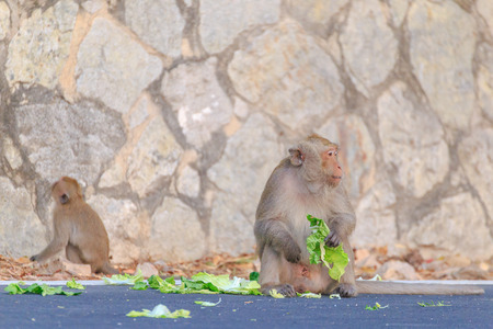 The child of a monkey eat food on the road.