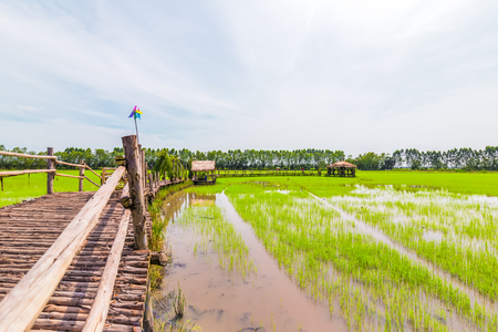 the way is wood in green field in midday. Imagens