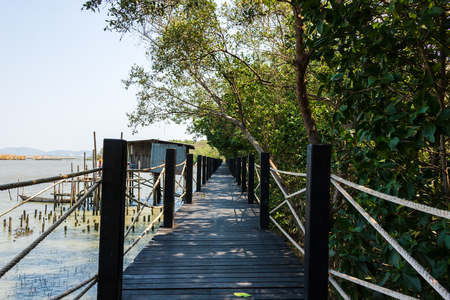 Wood  Bridge in the forest in mangrove forest. 写真素材 - 122674578