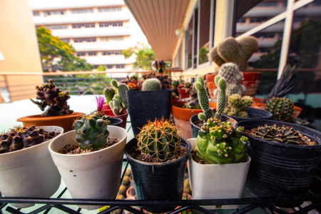 Set of domestic cactus closeup. Cactus Garden collection in small flowerpots. 写真素材 - 122674594