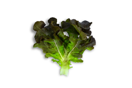fresh green lettuce salad leaves isolated on white background 写真素材 - 122677676