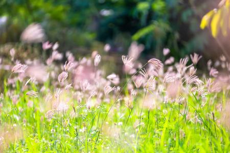 a flower grass in the garden.