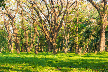 Big tree in the forest with light and shadow. Natural Background concept. 写真素材
