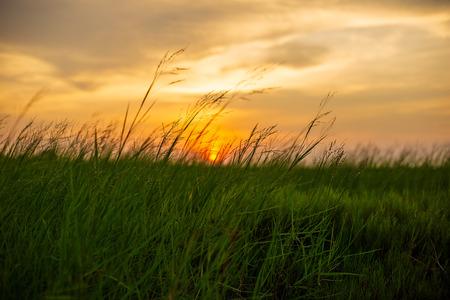 Green grass and sunset at countryside.