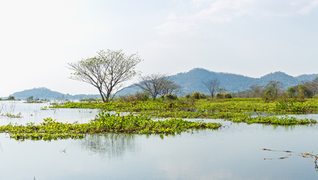 Landscape tree grow in water pond  and blue sky  with mountain back.