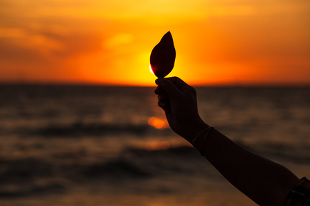 Silhouette Hand hold leaf on the beach at sunset 写真素材