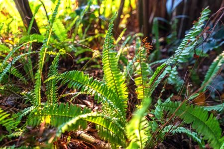 fern and light of sun and shadow.