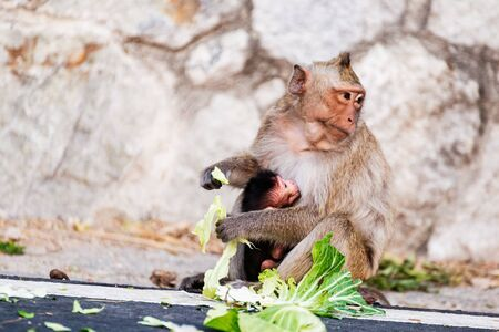 The child of a monkey and his mother. Mother monkey eat food.