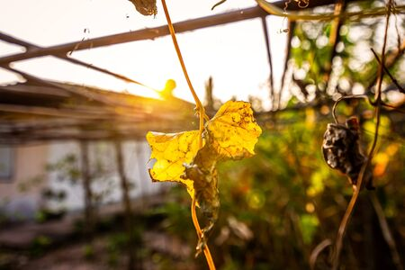 Dry leaves and sun light. Background nature concept.