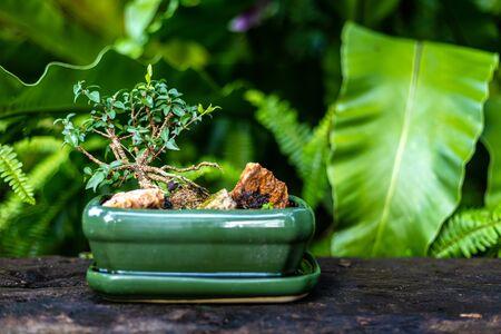 bonsai in green ceramic pot  on the wood bench. 写真素材