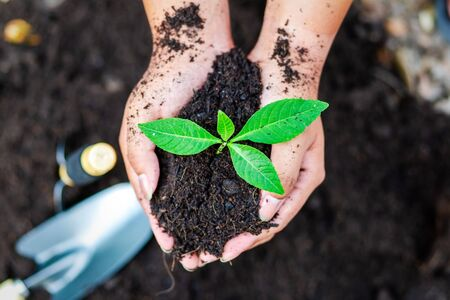hand holding little tree in soil. agriculture and save the world concept