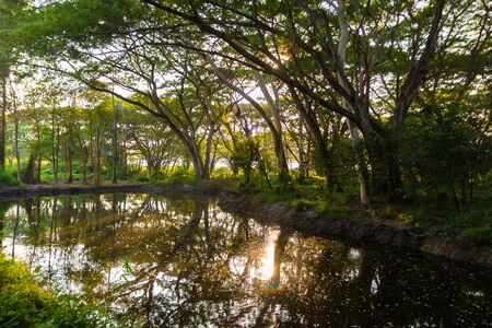 green forest and sun light. pond in the forest. natural background.