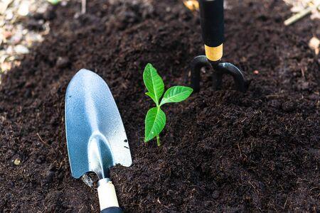 Crecimiento de árboles pequeños en el suelo. agricultura y salvar el concepto del mundo Foto de archivo