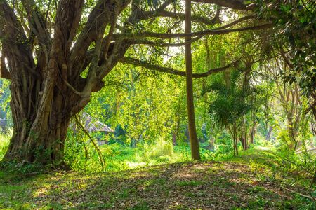 Big tree in green forest and sun light. natural background.