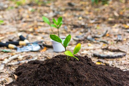 Small tree growth in soil. agriculture and save the world concept