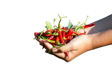 hand hold chili and white background.