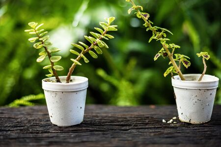 plant growth in pot collection on wood table.