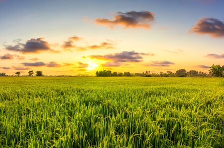 Green field in the morning with cloud at agriculture countryside. Beautiful Landscape.