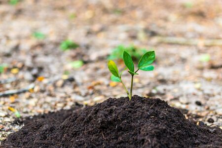 Small tree growth in soil. agriculture and natural concept