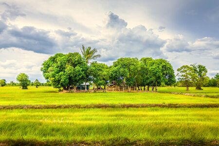 grüner Weizen flog mit Baum und blauem Himmel, ländliche Landschaft.