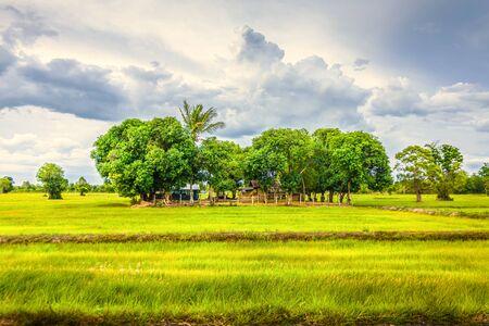 Trigo verde voló con árboles y cielo azul, campo rural.