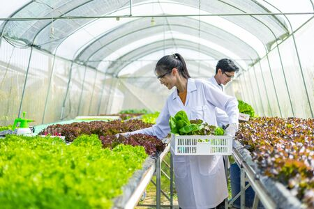 Scientists test the solution, Chemical inspection, Check freshness at organic, hydroponic farm. Banque d'images