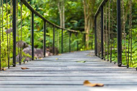 wood bridge in the forest. Reklamní fotografie