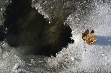 turbid: Dry leaf is lying on the thin ice covering cold turbid water showing reflection Stock Photo