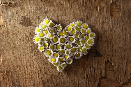 Daisy heart and arrow on a wooden surface. love concept.
