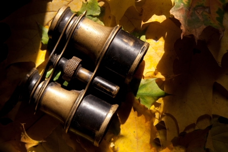 antique binoculars: Retro binoculars and autumn leaves.