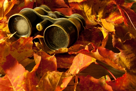 Retro binoculars and autumn leaves  Autumn background  Stock Photo