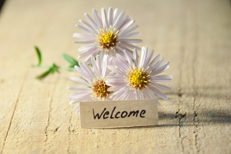 banner with welcome and  blossoms  Stock Photo - 22879898