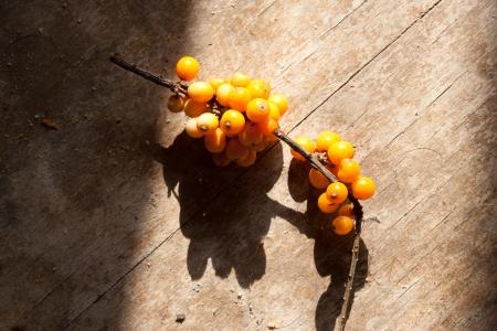 argousier: Argousier baies sur une surface en bois Banque d'images