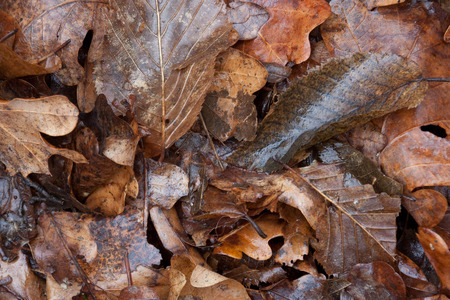 Fallen autumn leaves photo