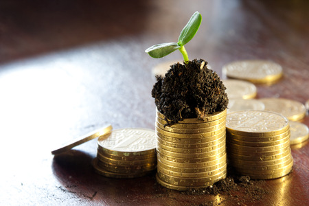 Golden coins in soil with young plant. Money growth concept. photo