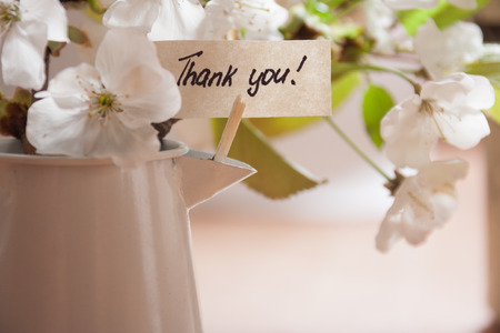 Banner with thank you and white spring blossoms as background. photo