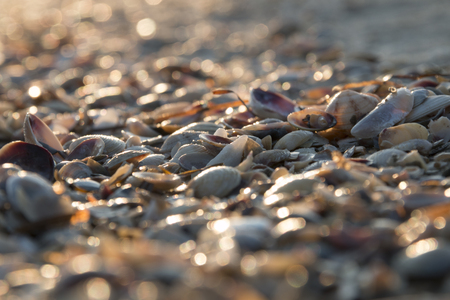 seashell: Seashell background, lots of different seashells piled together
